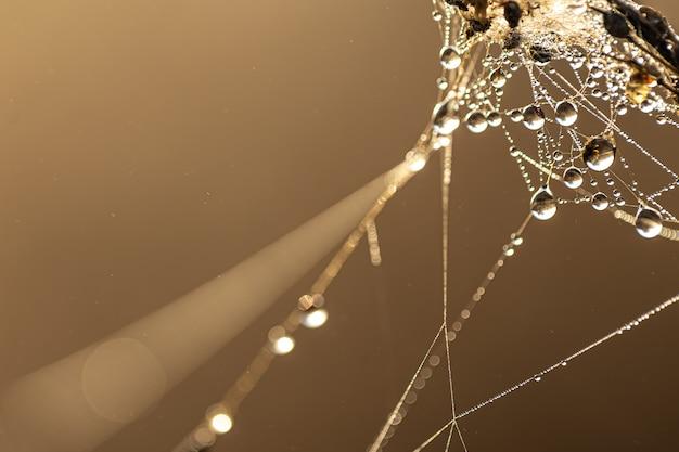 Natuurlijke abstracte achtergrond met dauwdruppels schijnt in de zon op een spinnenweb.