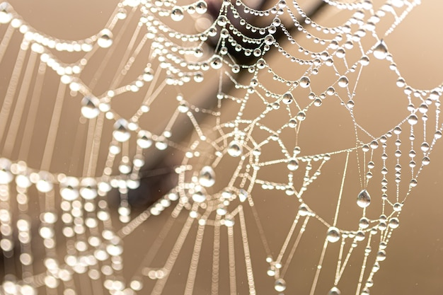 Natuurlijke abstracte achtergrond met glanzende dauwdruppels op een spinnenweb in zonlicht.