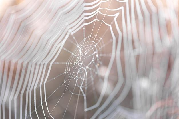 Natuurlijke abstracte achtergrond met spinnenwebben in zonlicht.