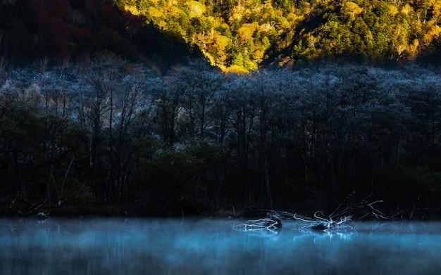 Natuurlijke achtergrond in de herfstseizoen