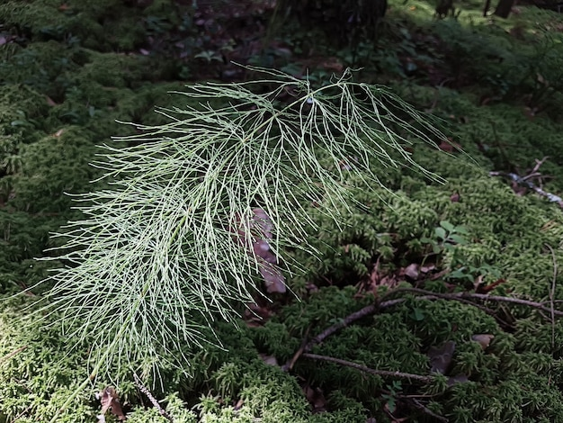 Natuurlijke achtergrond met vers mosgras en twijgen. achtergrond concept, natuur.