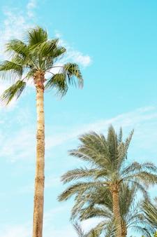 Natuurlijke achtergrond panorama landschap natuur kust kust van de rode zee in sharm el sheikh, egypte