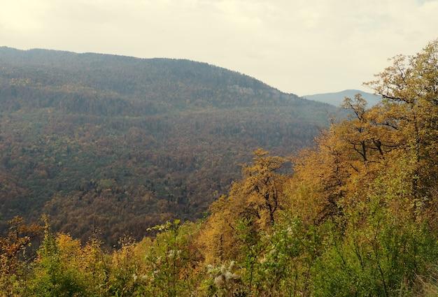 Natuurlijke achtergrond uitzicht op de achtergrond van de berg naar het bos hieronder, aard van rusland.