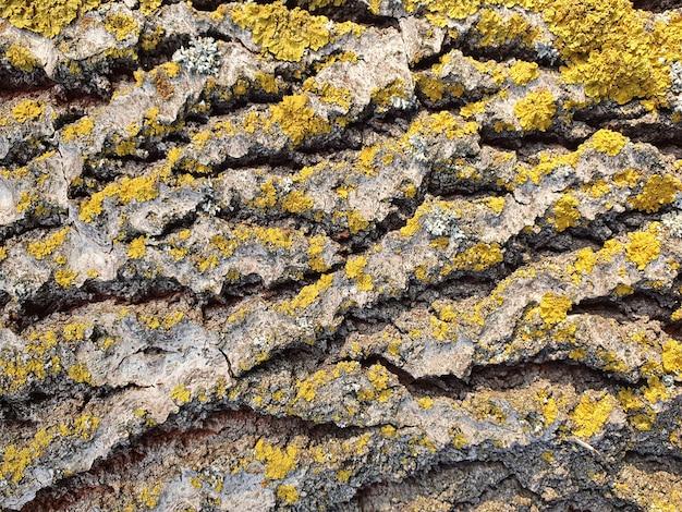 Natuurlijke achtergrond van oud hout close-up