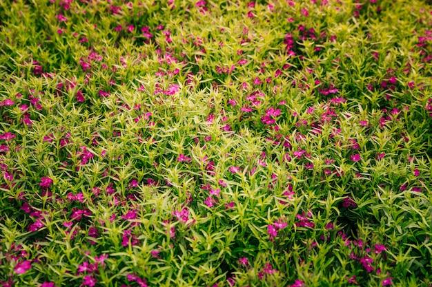 Natuurlijke achtergrond van roze bloemen met groene bladeren