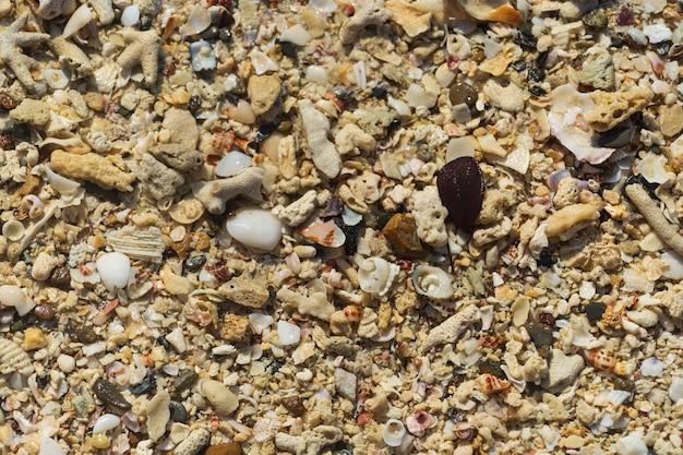 Natuurlijke achtergrond van verschillende zeeschelpen, van bovenaf gefotografeerd.