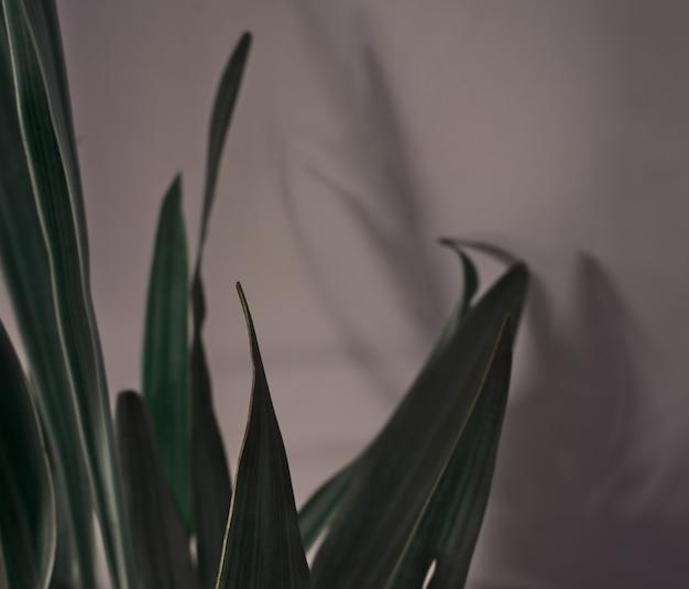 Natuurlijke bladeren met schaduwsilhouet tegen muurachtergrond