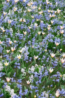 Natuurlijke bloemenachtergrond