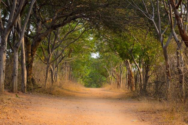 Natuurlijke bogen op een leeg pad