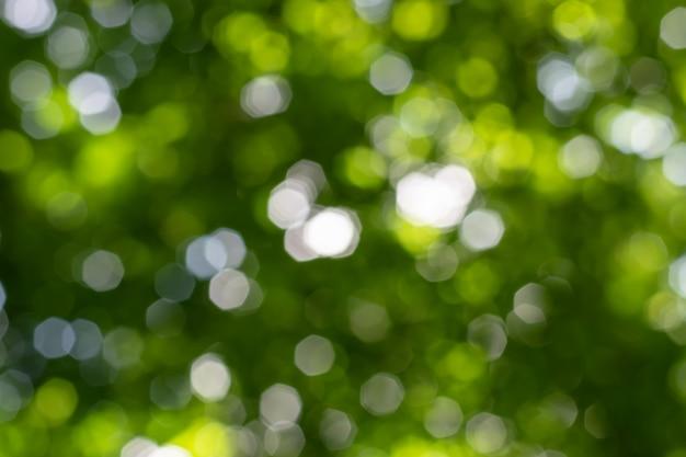 Natuurlijke bokehachtergrond met bladeren, bomen en hemel.