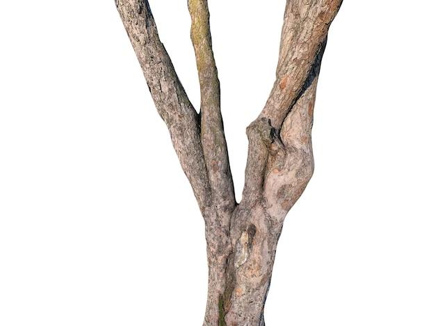 Natuurlijke boomstam geïsoleerd op witte achtergrond