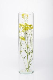 Natuurlijke cosmetica, biologisch product van planten en bloemen, kruidencosmetica voor huidverzorging