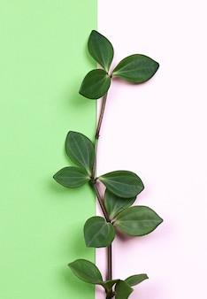 Natuurlijke creatieve concept groene plantentak met bladeren op trending roze groene achtergrond