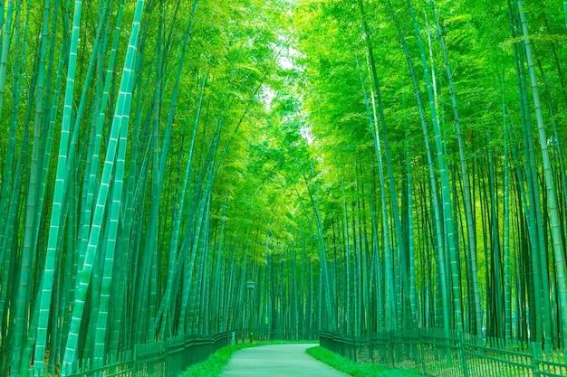 Natuurlijke frisheid regen ochtend japan