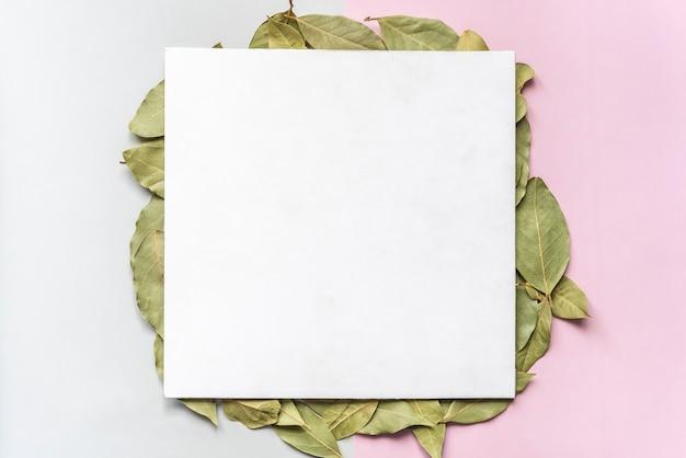Natuurlijke gedroogde groene bladeren op zachte kleurenachtergrond nock omhoog met exemplaarruimte f
