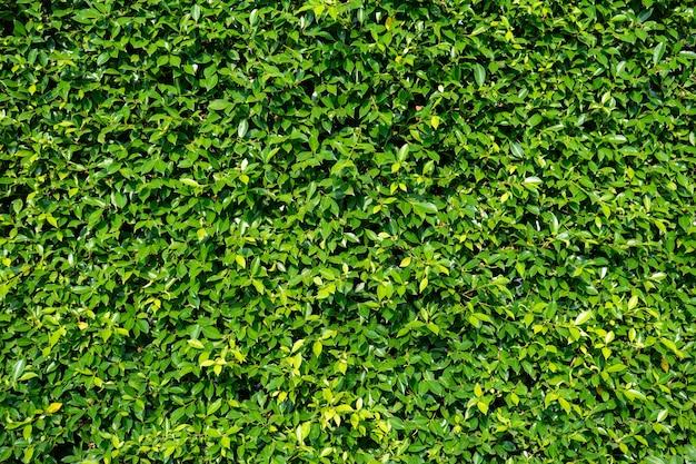 Natuurlijke groene achtergrond van groene bladeren