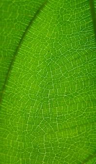 Natuurlijke groene bladachtergrond selecteer een specifieke focus