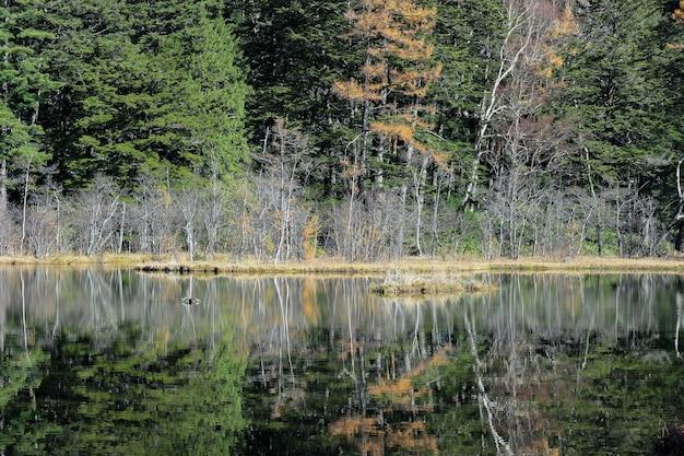 Natuurlijke groene bladerenboom die myojin-vijver overdenken bij japanse alpen.