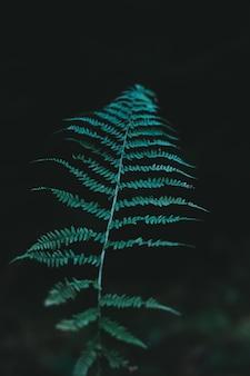 Natuurlijke groene planten varen in de berg. aqua menthe color 2020-trends!