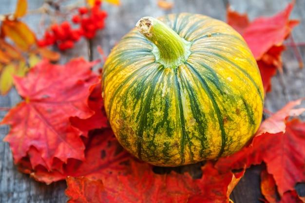Natuurlijke herfst herfst weergave pompoen en esdoorn bladeren