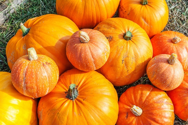 Natuurlijke herfst herfst weergave pompoen op eco boerderij achtergrond. inspirerend oktober of september behang. verandering van seizoenen, rijp biologisch voedselconcept. halloween-feest thanksgiving-dag. Premium Foto