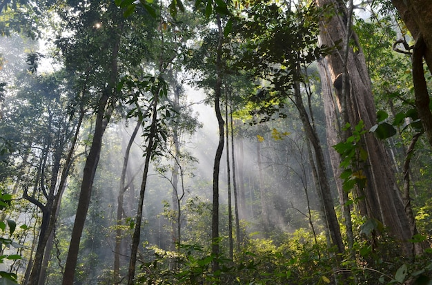 Natuurlijke hulpbron in tropisch regenwoud, het nationale park van khao yai, thailand