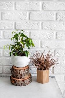 Natuurlijke inrichting in interieur. ficus plant in een pot en boomstronk op witte bakstenen muur achtergrond.