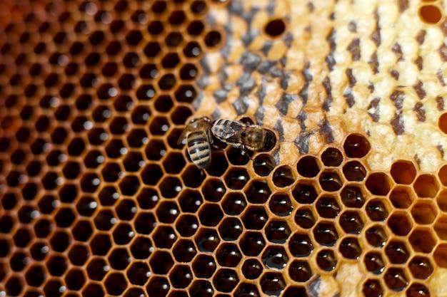 Natuurlijke kleuren dichte omhooggaande honingraat in houten bijenkorf met bijen op het. bijenteelt concept.