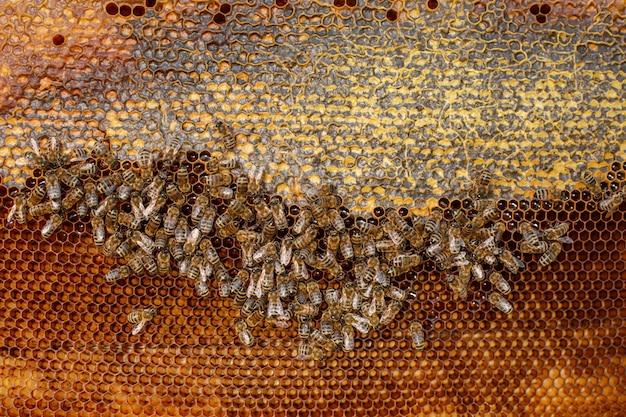 Natuurlijke kleuren dichte omhooggaande honingraat in houten bijenkorf met bijen op het. bijenteelt.