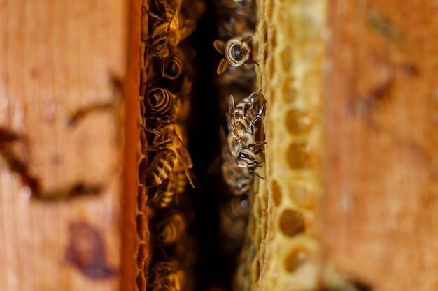 Natuurlijke kleuren dichte omhooggaande honingraat in houten bijenkorf met bijen op het.