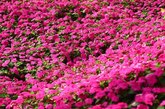Natuurlijke kleurrijke bloemen tuinzicht landschap