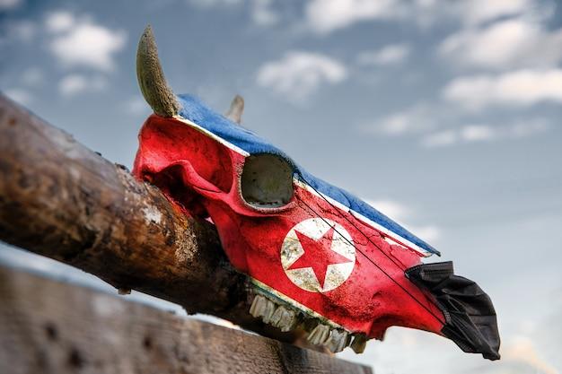 Natuurlijke koeschedel op houten hek met vlag van noord-korea. vooraan wordt een beschermend medisch masker aangebracht