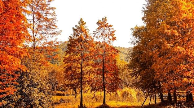 Natuurlijke landschap in warme kleuren