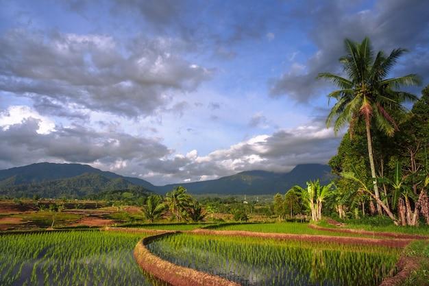 Natuurlijke omgeving van indonesische rijstvelden met prachtige heuvels in het dorp kemumu, bengkulu utara, indonesië