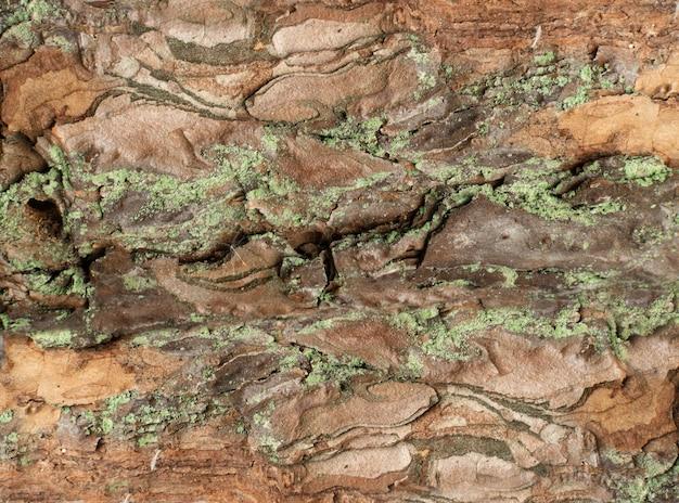 Natuurlijke pine tree bark texture pattern