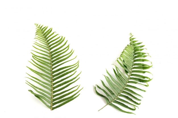 Natuurlijke reeks fern leaf, sprig fern-bladeren, geïsoleerde voorwerpen