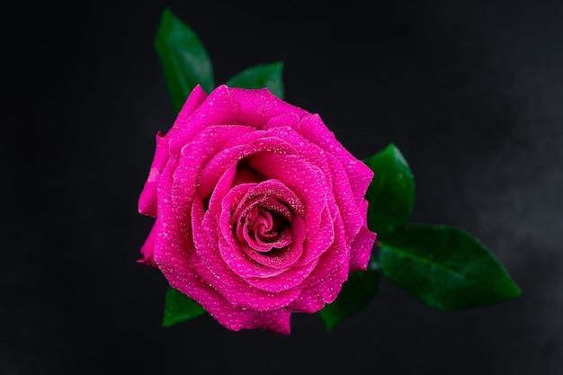Natuurlijke rode rozen achtergrond.