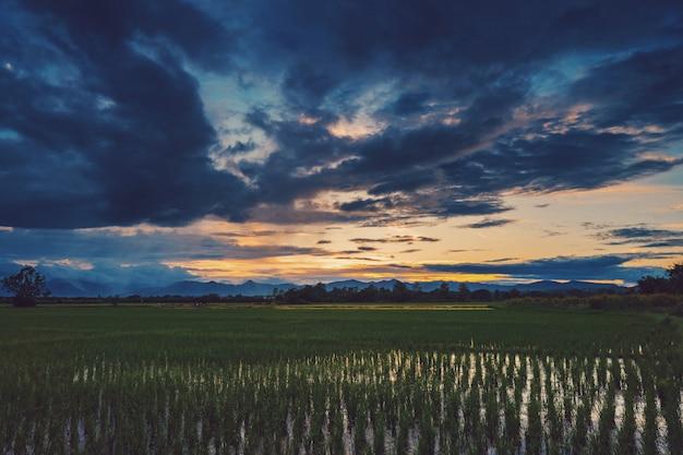 Natuurlijke schilderachtige mooie veld zonsondergang en storm wolken en groene veld agrarische achtergrond