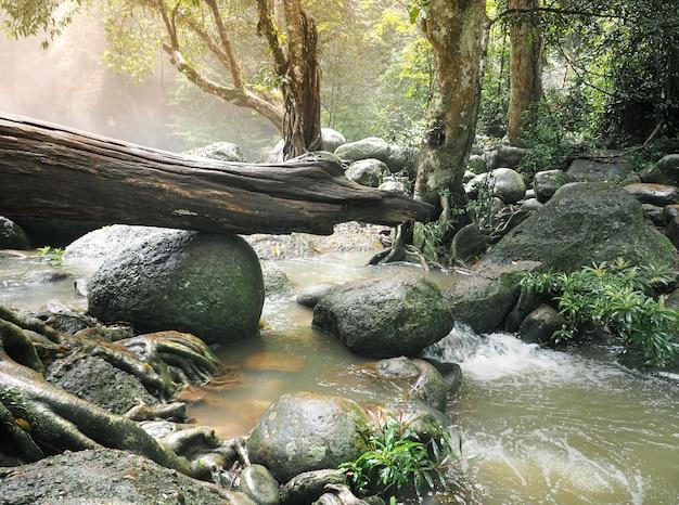 Natuurlijke schoonheid van tropisch bos in thailand.