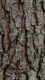 Natuurlijke schors stamoppervlak