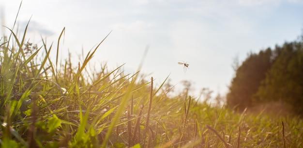 Natuurlijke sterke wazige achtergrond van groene grasbladen close-up verse weide in zonnige ochtend