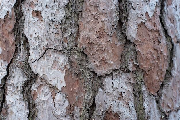 Natuurlijke textuur van een close-up van de boomschors