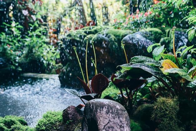 Natuurlijke tropische achtergrond natuur bos jungle gebladerte