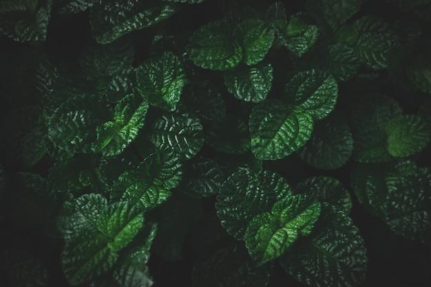 Natuurlijke tropische blad textuur donkere toon abstracte groene blad textuur achtergrond