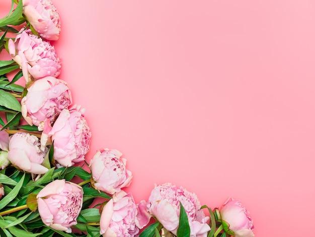 Natuurlijke tuin roze pioenrozen op een roze achtergrond