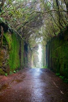 Natuurlijke tunnel in het landelijke park anaga in tenerife, canarische eilanden, spanje