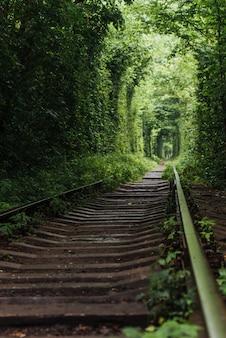 Natuurlijke tunnel van liefde die uit de bomen komt