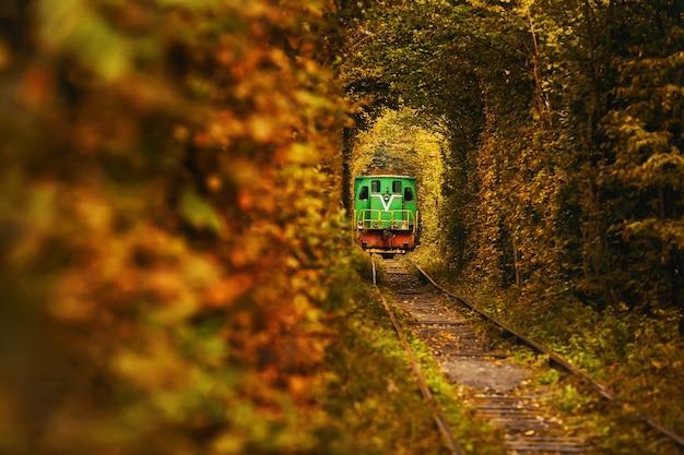 Natuurlijke tunnel van liefde in klevan, oekraïne. vintage oude groene trein op de prachtige tunnel.