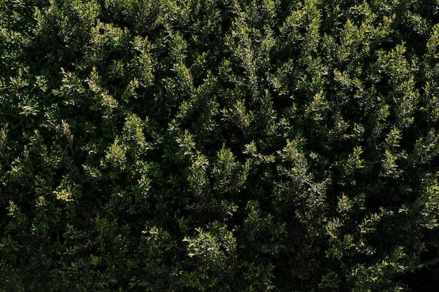 Natuurlijke vegetatie textuur