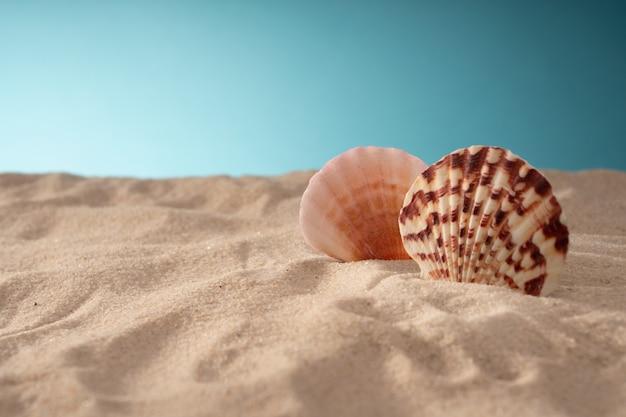 Natuurlijke zeeschelpen